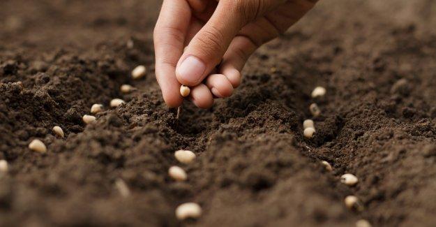 2020 yeni dünya düzeninin tohumuydu