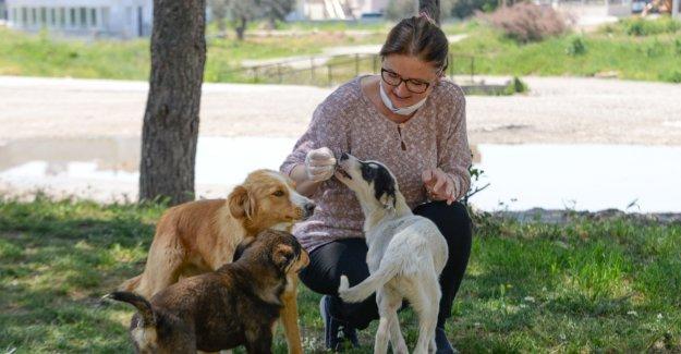 Bergama'da can dostlar unutulmuyor