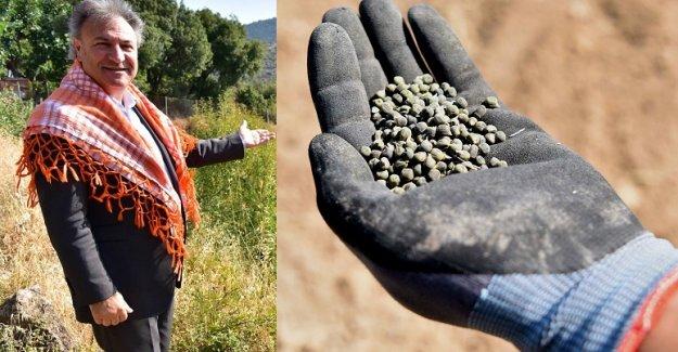 Bu tohumlar Bornova Bamyası'nı geleceğe taşıyacak