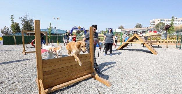 Buca Belediyesi 1 yılda 8 bin hayvana kucak açtı