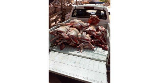 Buca'da kaçak et operasyonu: 20 küçükbaşa el kondu