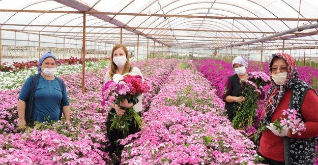 Hem anneler sevinecek, Hem de çiçek üreticileri