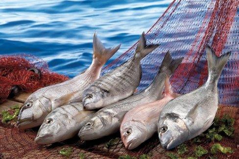 İhraç edilen her dört balıktan üçünü Egeli balıkçılar ihraç etti