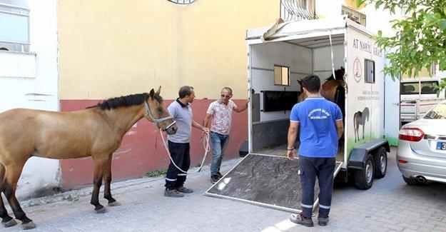 Karşıyaka'da 'başıboş at' operasyonu