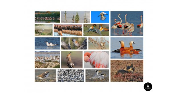 Mavişehir'e Flamingo Doğa Parkı geliyor