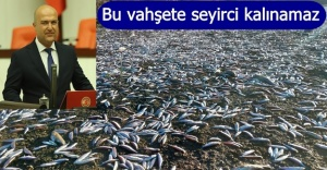 BALIK ÖLÜMLERİ MECLİS GÜNDEMİNDE!