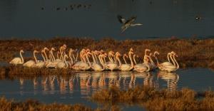 Flamingolar İzmir'de