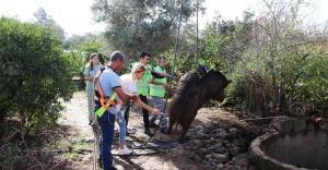 Muğla'da kuyuya düşen yaban domuzu kurtarıldı