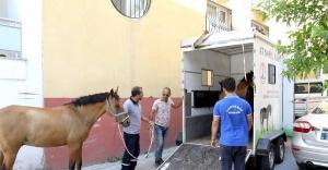 Atlar artık 'başıboş' kalmayacak!