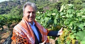 Bornova Misketi için yeni bağ oluşturuluyor