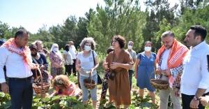 Bornova'da ilk bamya hasadı Soyer'den