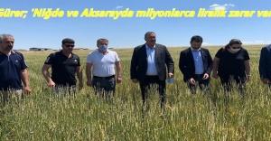 """Gürer: """"Çiftçi dolunun vurduğu arpa ve buğdayı biçip hayvan yemi yapıyor"""""""