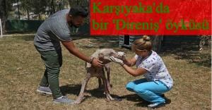 Hasta köpeği kucağında taşıyıp hayata döndürdü