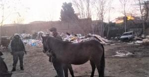 Konak zabıtası Atları kurtardı