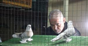 Kurbanlık fiyatına güvercinler mezatla satılıyor