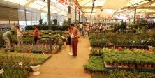 Karşıyaka, çiçek, festival