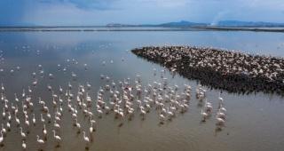 Kuş Cenneti  flamingolarla şenlendi