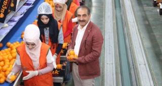 Yaş meyve sebze ve meyve sebze mamulleri sektörü 509 milyon doları Türkiye'ye kazandırdı